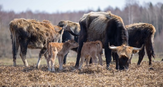 Changes for visiting large herbivore pastures at Nature Park Pape